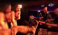 Leman Sam Şarkı Söylerken Sahneye Köpek Fırladı, Sanatçıda Mikrofon Uzatınca…